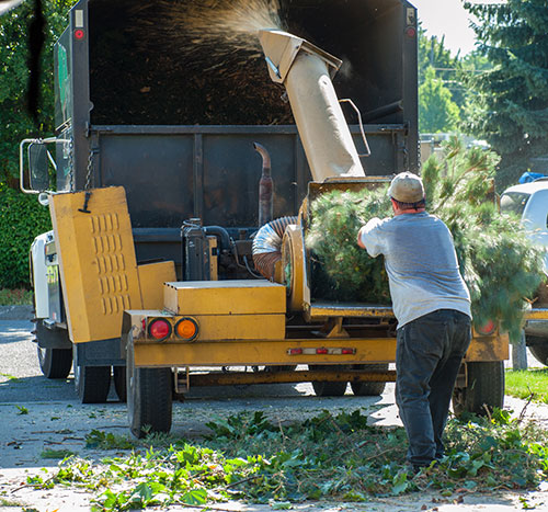tree trimming equipment